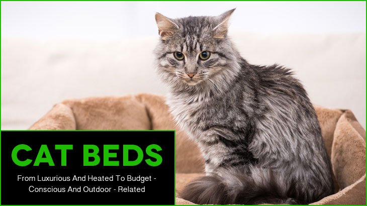 CatBeds