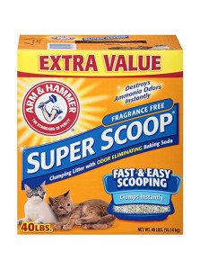 Choosing The Best Cat Litter For Your Kitty Catological Com