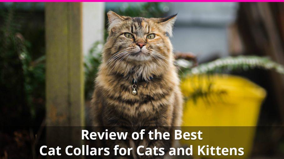 best cat collars