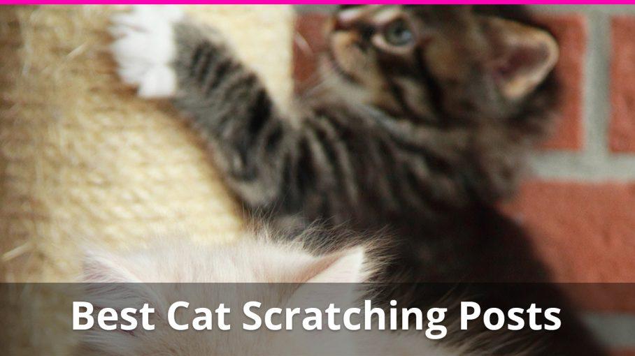 best cat scratching posts