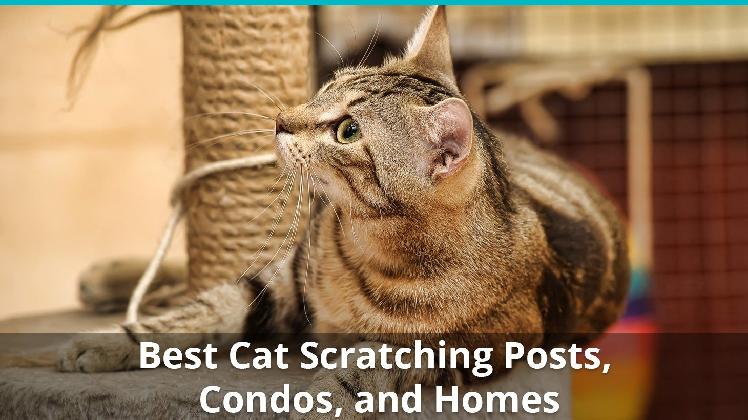 Best Cat Scratching Posts Towers Condos And More