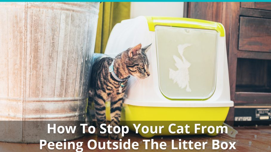 Cat Ing Outside The Litter Box