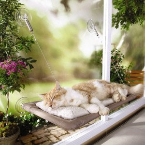 sunny_seat_cat_perch