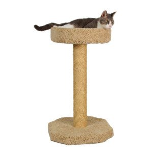 Carpet Cat Scratcher