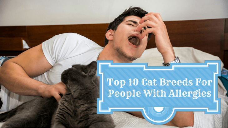 Top 10 Cat Breeds For People With Allergies