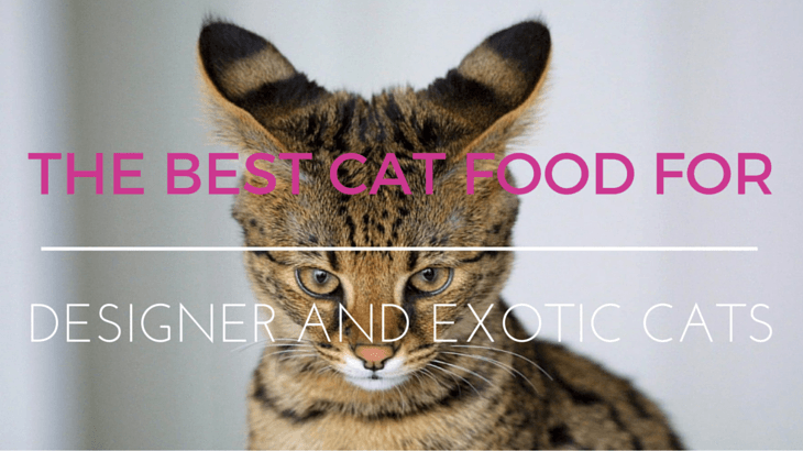 Exotic Designer Cat Food