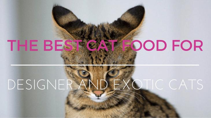 Exotic Designer Cat Food