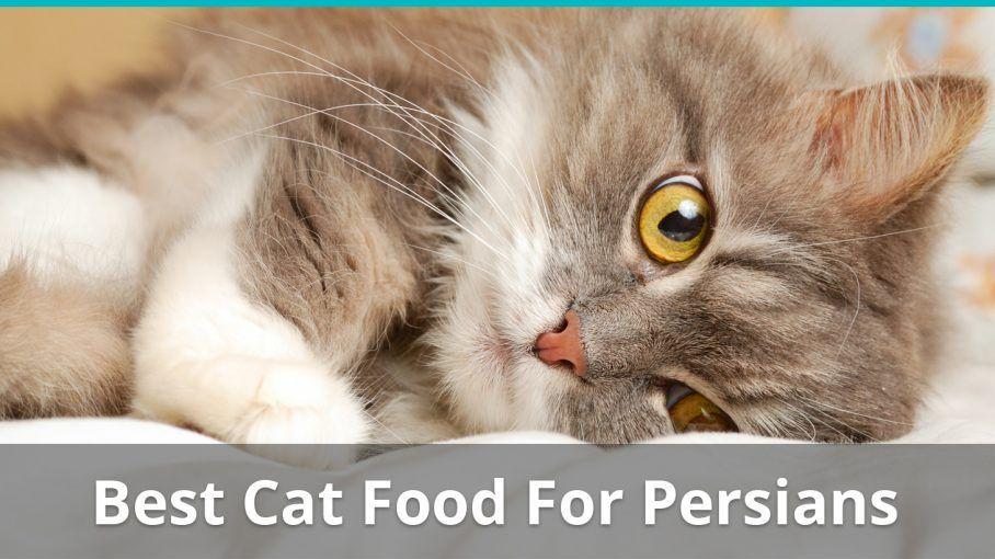 best cat food for persians