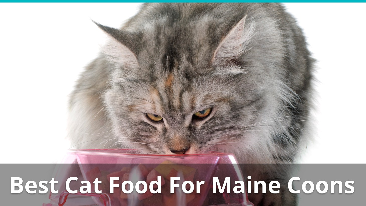 best cat food maine coon