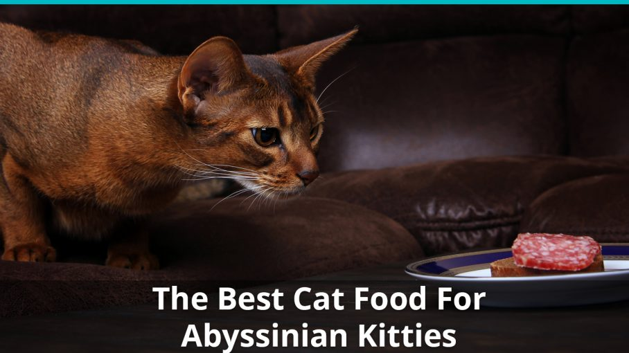 best abyssinian cat food