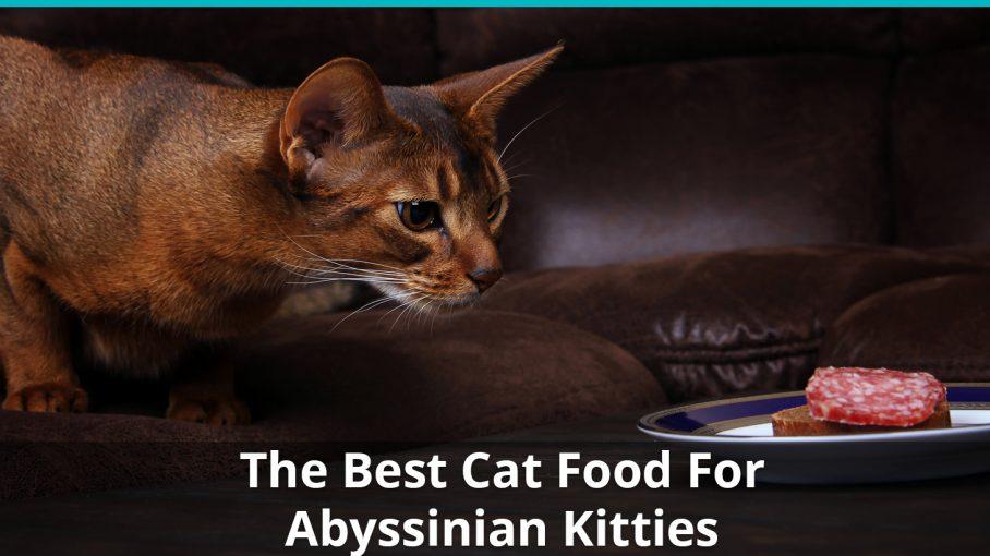 best abyssinian cat food