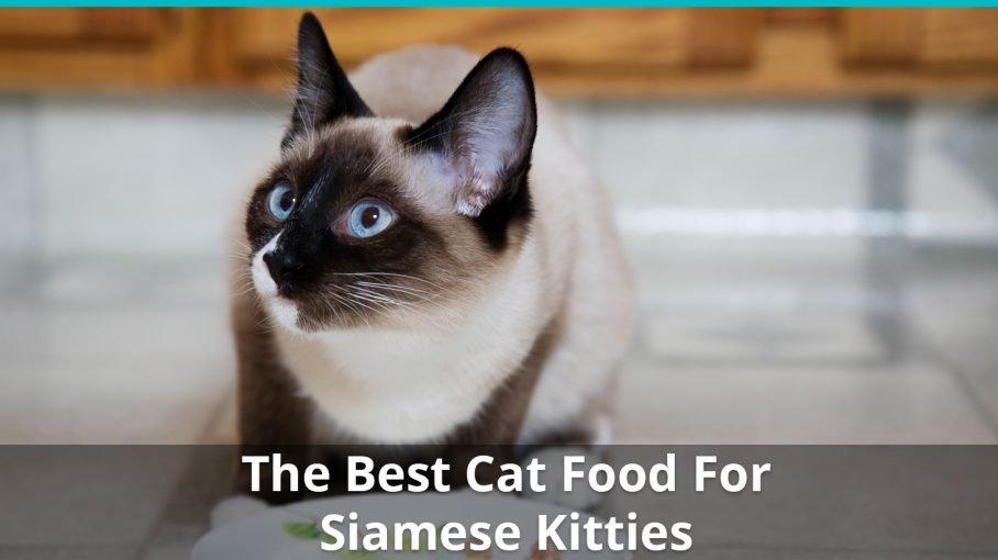 best siamese cat food