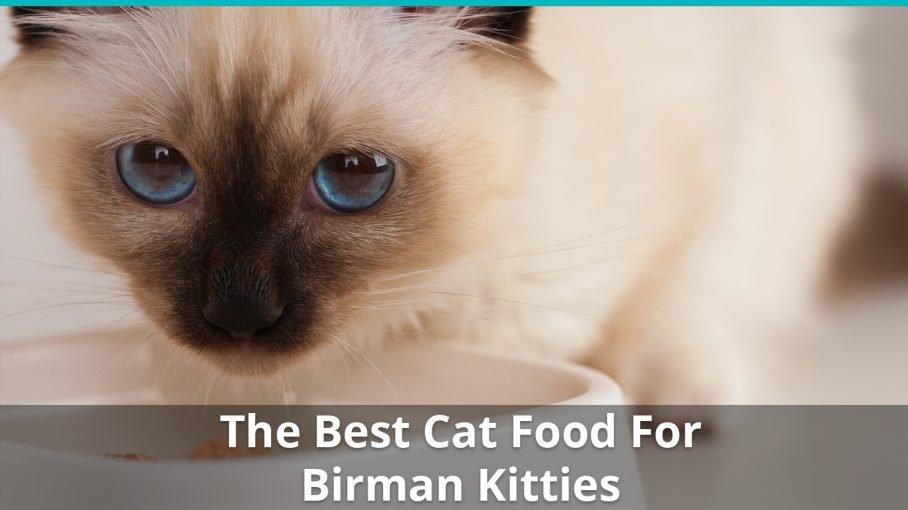 best birman cat food