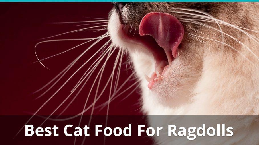 best cat food for ragdolls