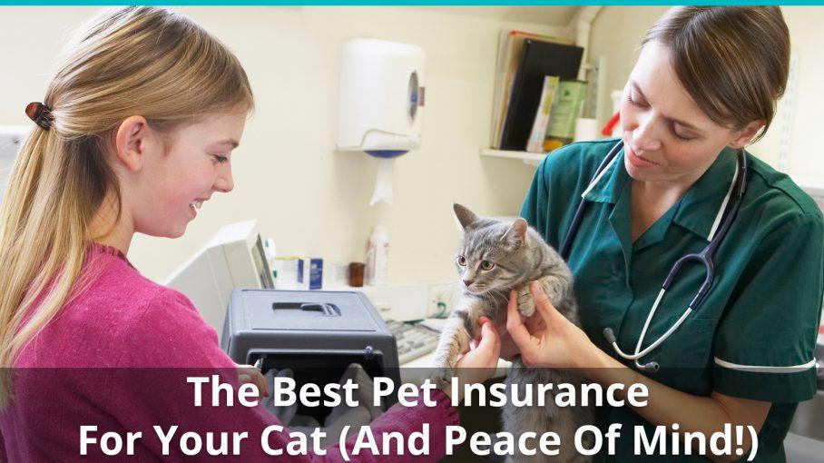 best cat insurance