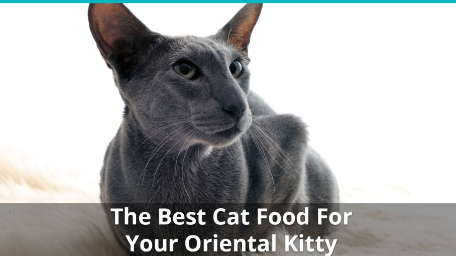 best oriental cat food