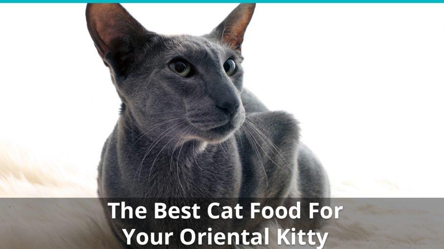 best oriental cat food