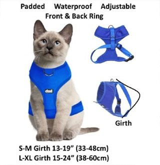 Best Harness For Ragdoll Cat