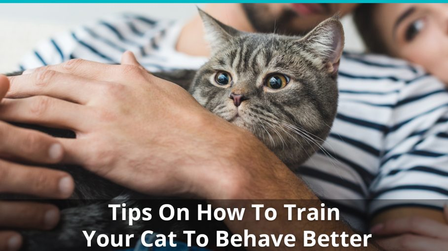 how to train your cat