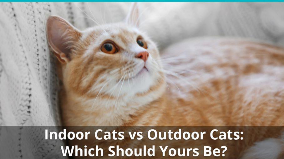 indoor cat vs outdoor cat