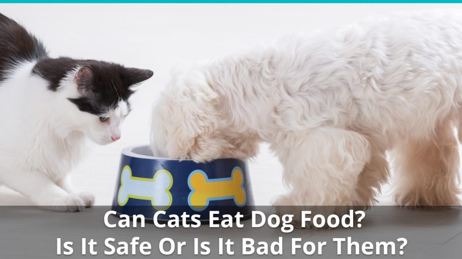 Can Dogs Eat Cat Food On A Regular Basis