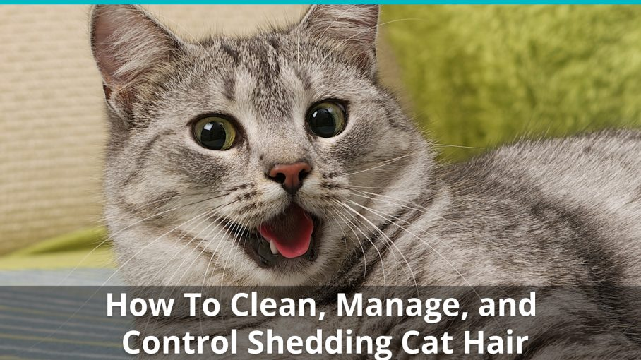 How To Clean And Control Cat Hair Stop It From Taking