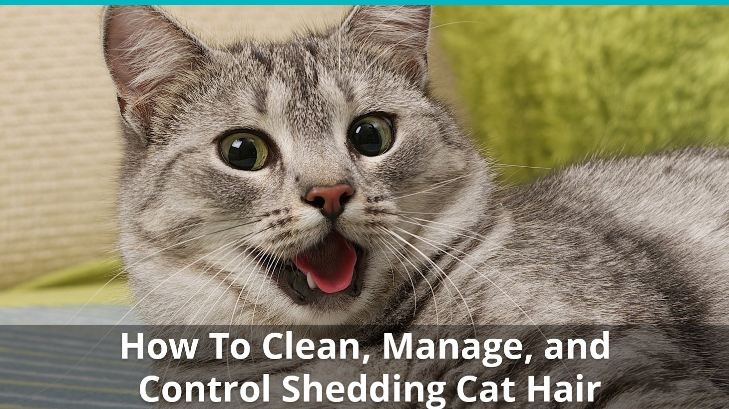 How To Stop Cat Hair From Getting Everywhere