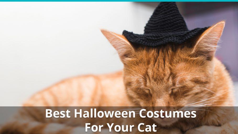 best halloween costume for cats