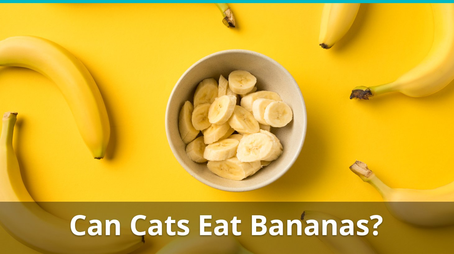 Are Bananas Safe For Cats To Eat