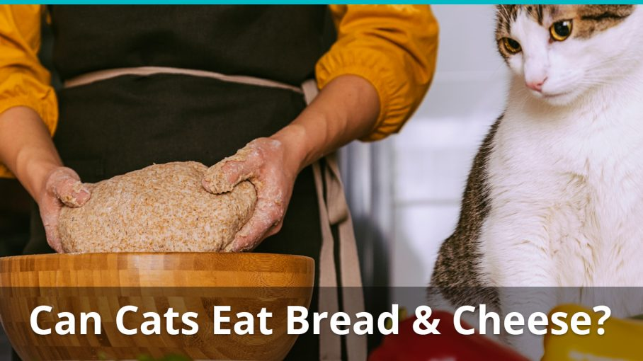 can cats eat bread cheese