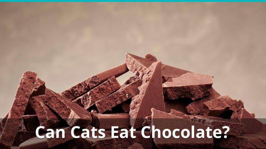 cat medicine for upset stomach
