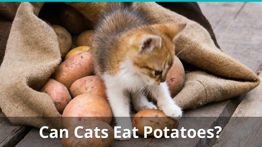 can cats eat potatoes