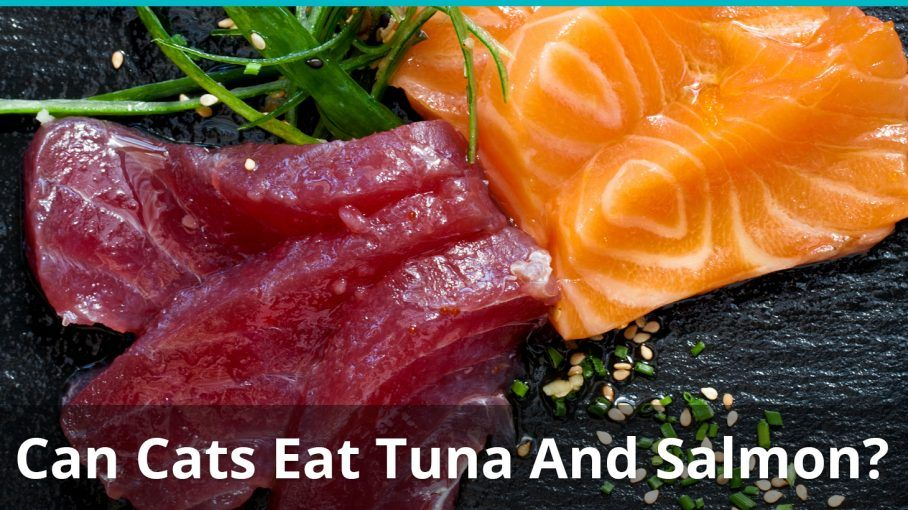 can cats eat tuna salmon