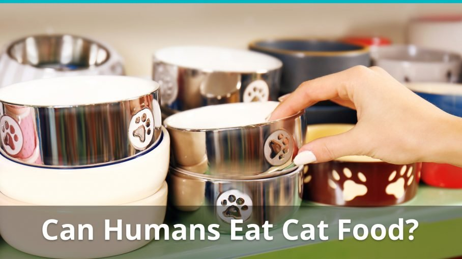 can humans eat cat food