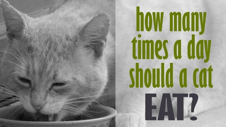 How Much Should A Cat Eat Per Serving