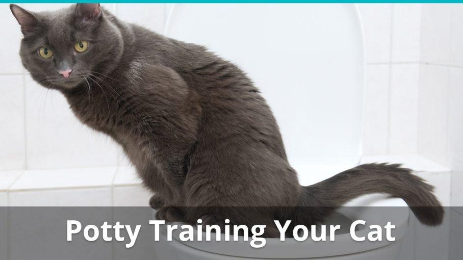 how to potty train cat toilet