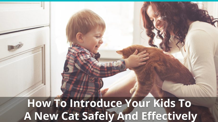 introduce kids to cat