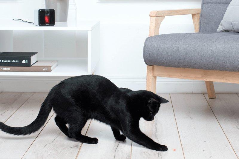 petcube play cat