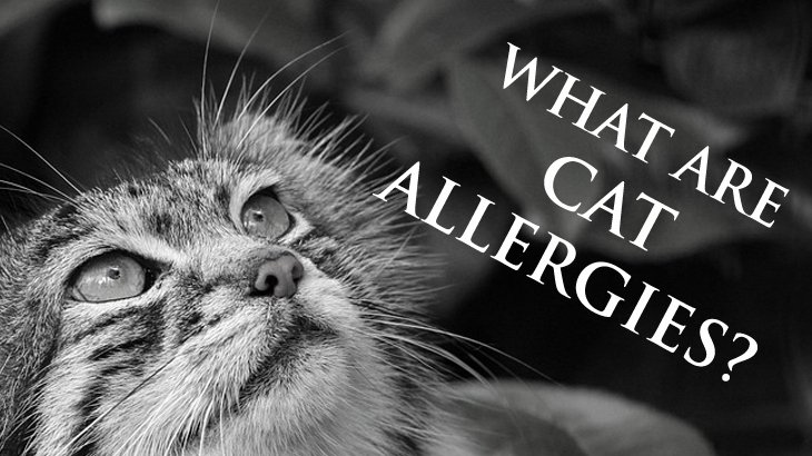 Cats That People Aren T Allergic To