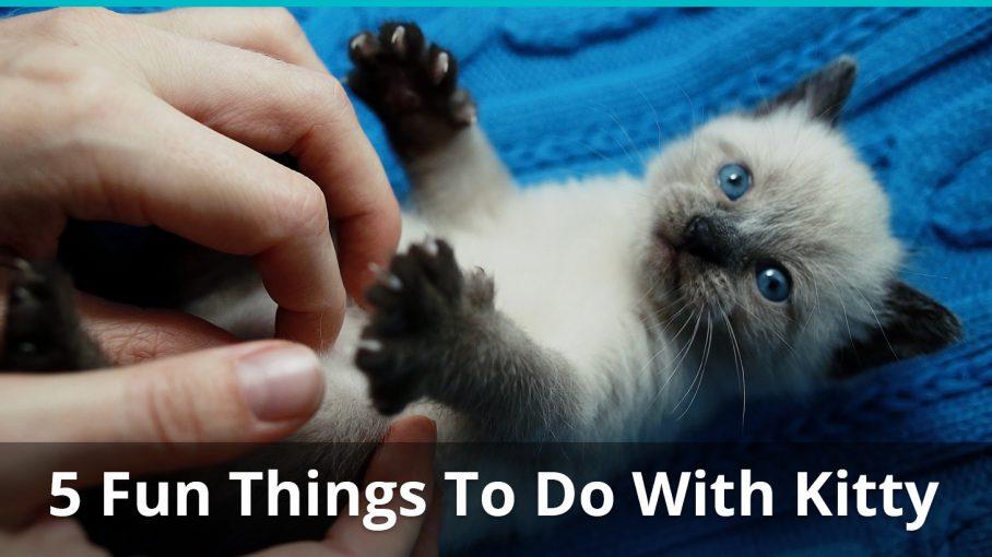 smart cat scratcher