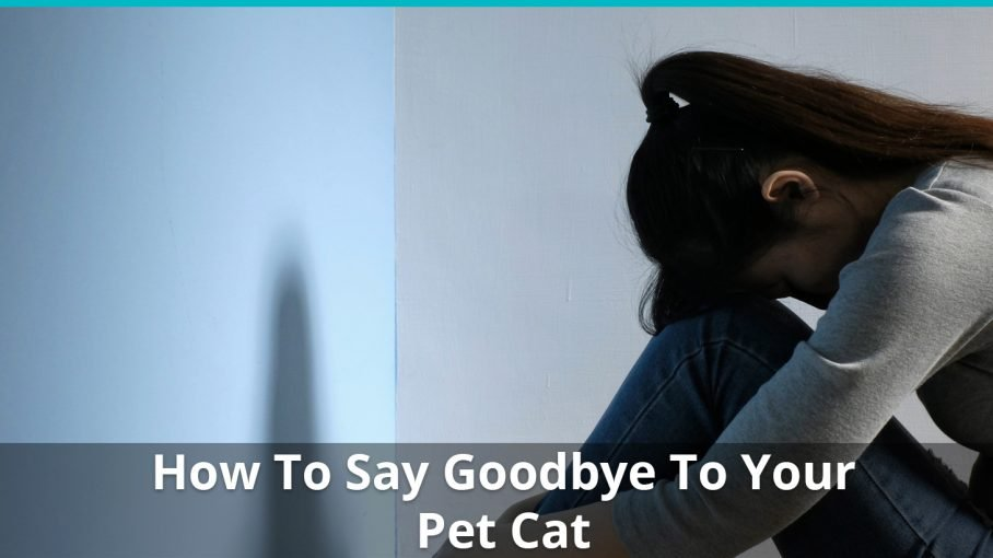 how to say goodbye cat