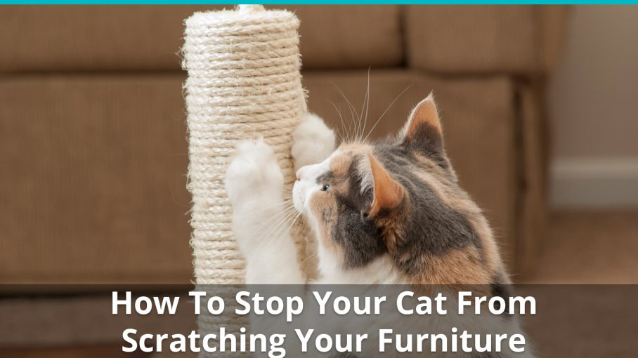 how to stop cat scratching furniture