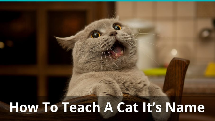 how to teach cat name