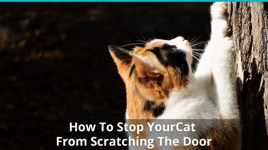 stop cat scratching door