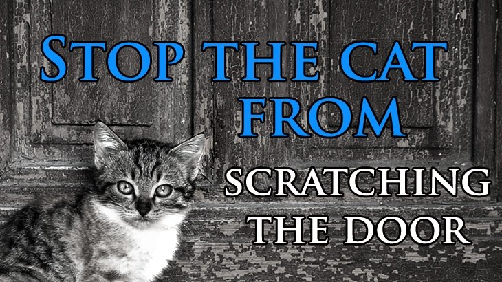 Stop Cat From Scratching Cute Cats