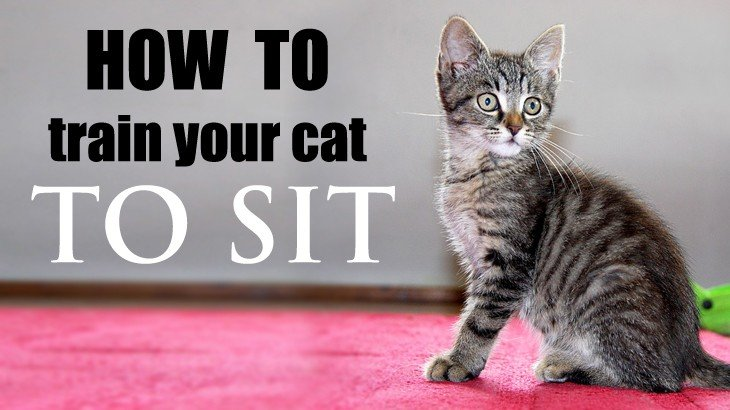 How to train a cat to come here