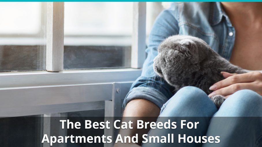 best cat breeds apartments