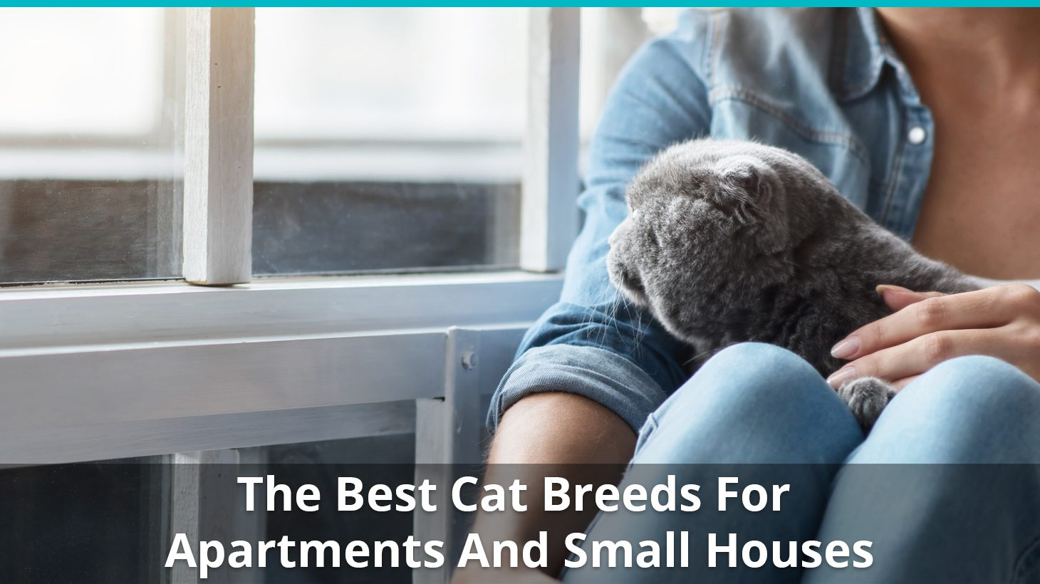 The Best Low Maintenance Indoor Cat Breeds For Apartments And Small Houses