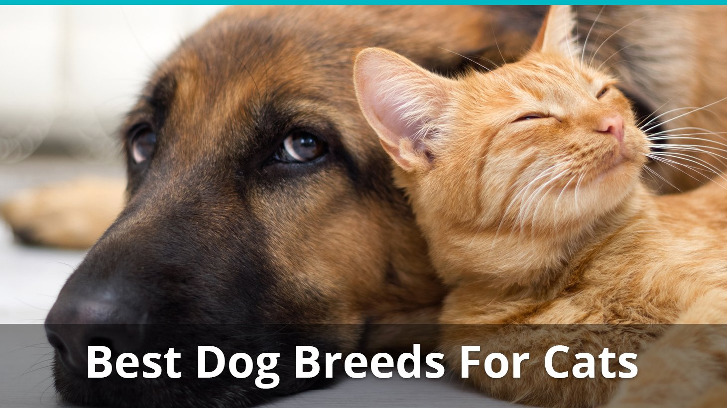 What Are The Best Dog Breeds For Cats To Get Along With