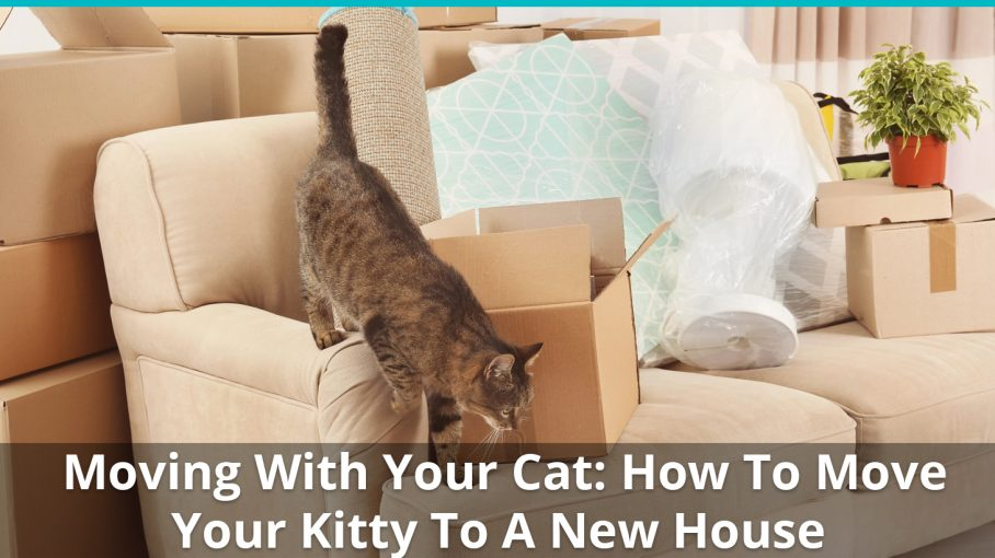 how to move your cat to a new home